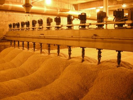 OSU Barley Project barley piles malting pic